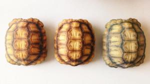caparazon-tortuga-3d